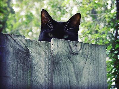 黒猫 塀 覗く 警戒
