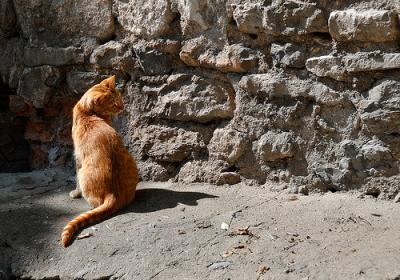 猫 外 眺める フェレンゲルシュターデン現象