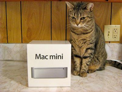 猫 Mac mini 箱 動物