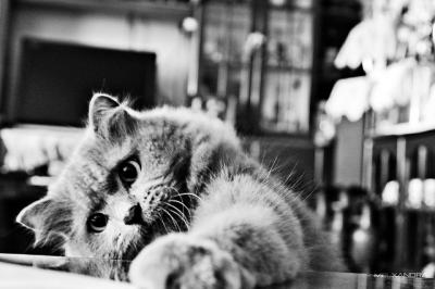 猫 床 手を伸ばす