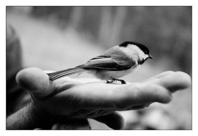 鳥 手 餌 自然