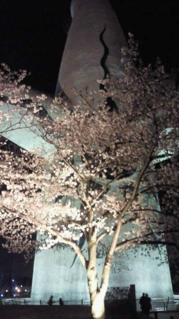 201303sakura2