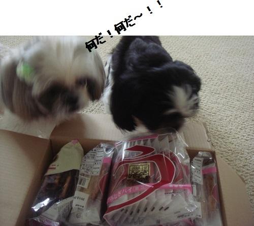 DSC03974moji.jpg