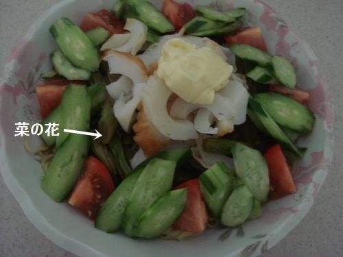 DSC03979moji.jpg