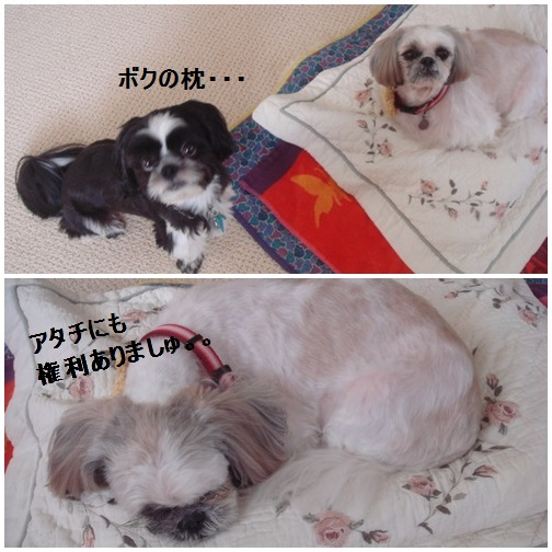 pageDSC03915x2moji.jpg