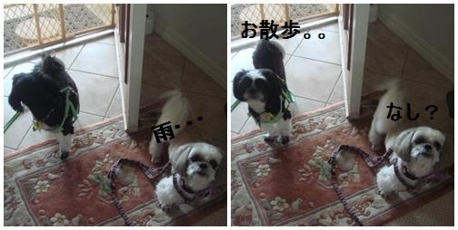 pageDSC04124x2moji.jpg