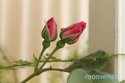 m-rose3-1.jpg