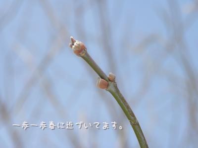 DSCN105.jpg