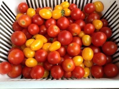 7.14トマト