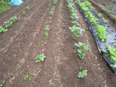 10.8家庭菜園
