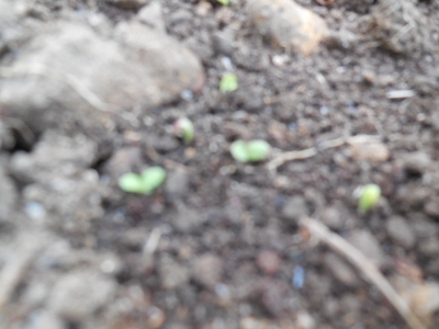 10.18家庭菜園
