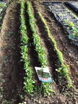 10.27家庭菜園5