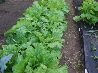 10.30家庭菜園3
