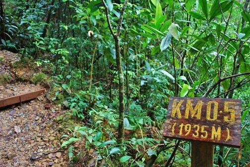 キナバル山16
