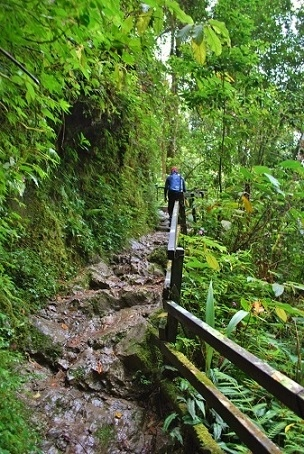 キナバル山14