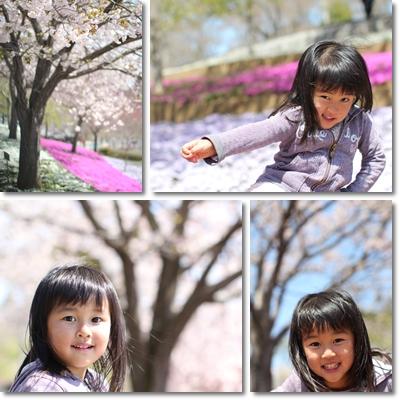 八重桜と芝桜とももね1