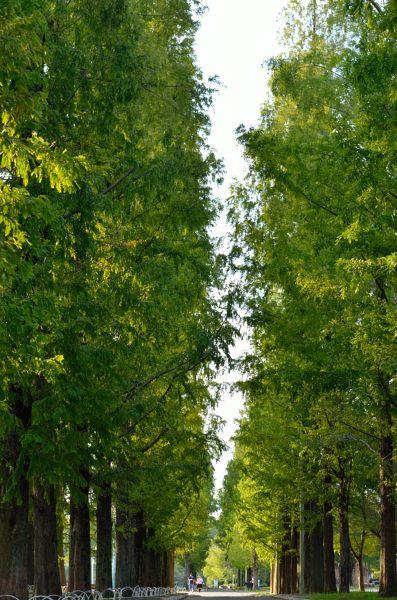 _鶴見緑地公園hana_09