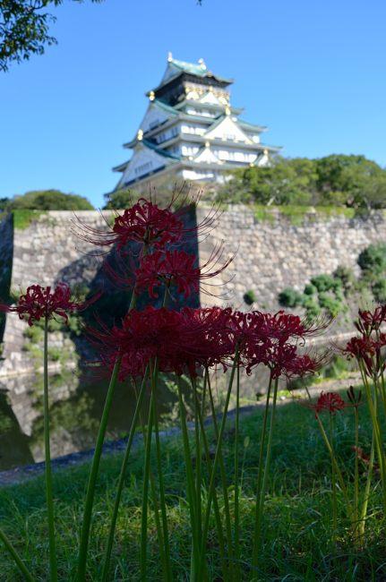 _彼岸花と大阪城