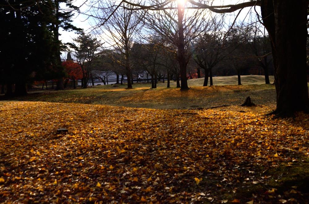_落葉と太陽DSC_0156