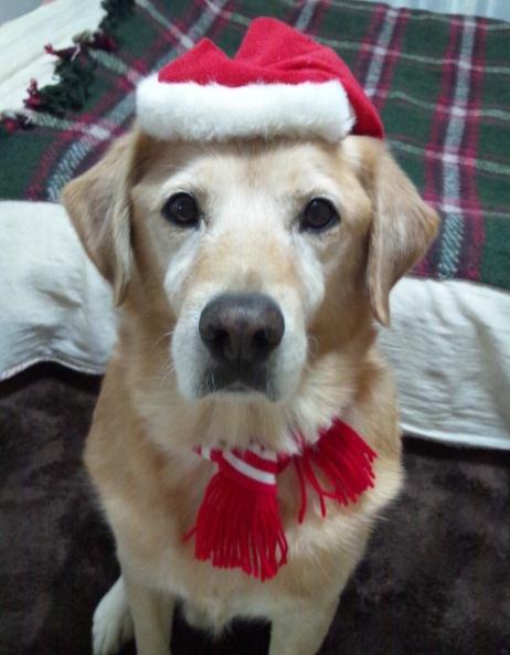 2012 christmas fine 2