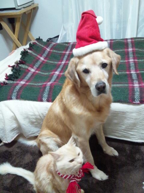 2012 christmas fine ren 3