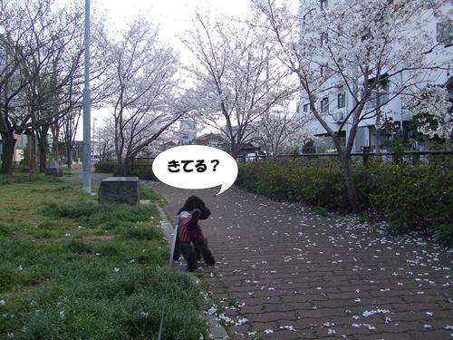 201304082234408c2.jpg