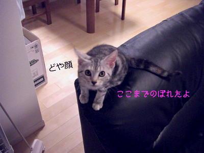 縮画cimg0921