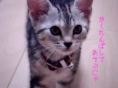 縮画2008夏かくれんぼ1
