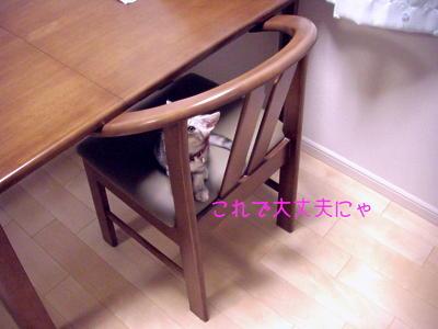 縮画2008夏かくれんぼ3
