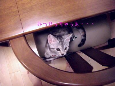 縮画2008夏かくれんぼ4