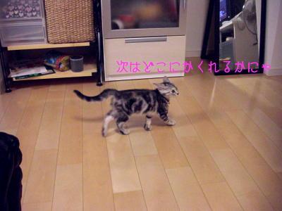 縮画2008夏かくれんぼ5