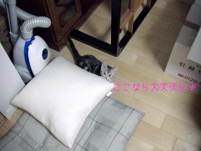 縮画2008夏かくれんぼ8