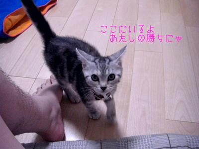 縮画2008夏かくれんぼ9