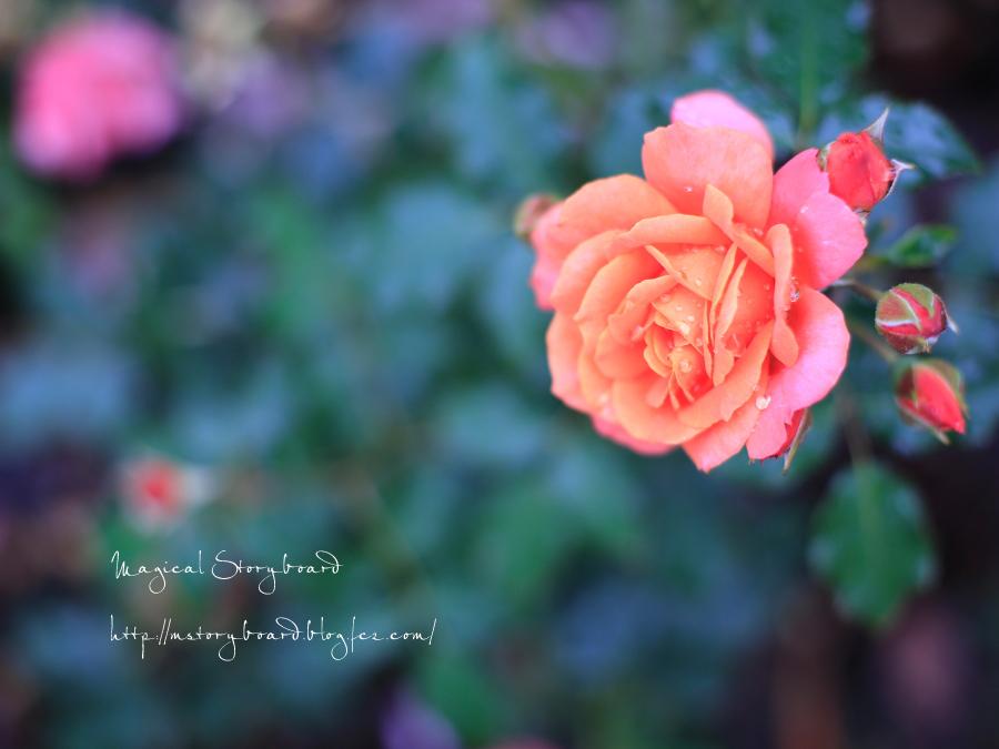 _68A9550_S.jpg