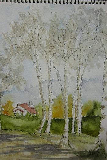 蒜山の白樺