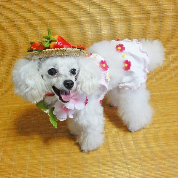 moblog_1667a469.jpg