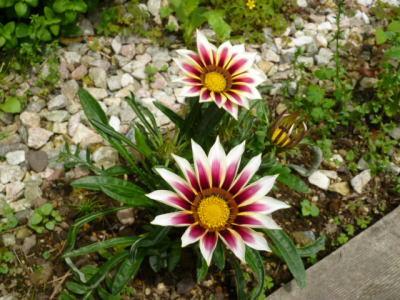 2012-flower-1.jpg