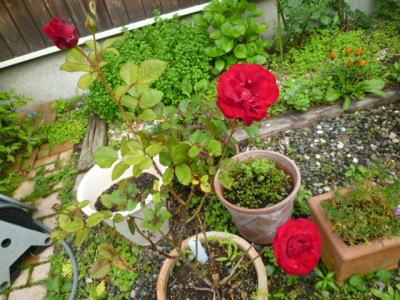 2012-flower-10.jpg