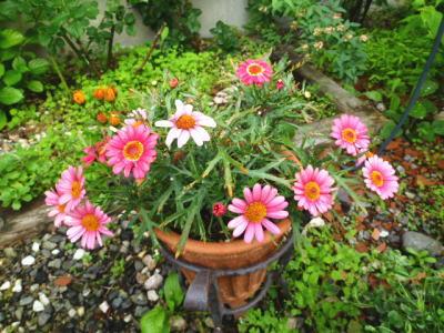 2012-flower-11.jpg