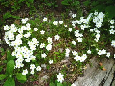 2012-flower-12.jpg