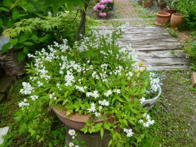 2012-flower-2.jpg