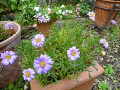 2012-flower-4.jpg