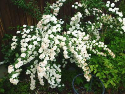 2012-flower-5.jpg