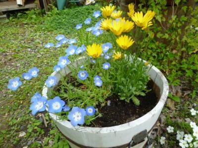 2012-flower-7.jpg
