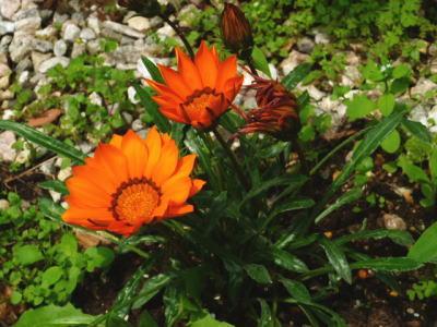 2012-flower-9.jpg