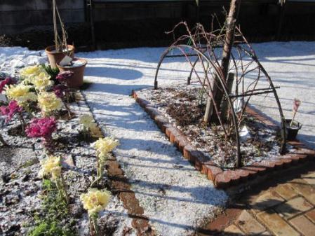 tntnH25-02-16今朝の庭 (1)