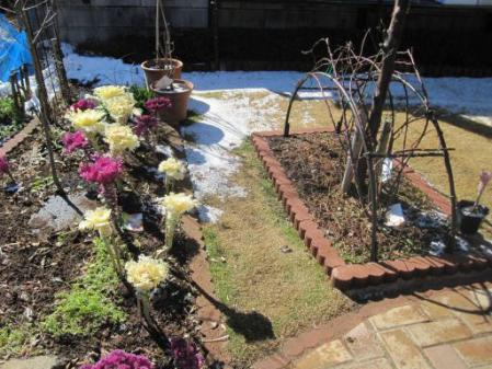 tntnH25-02-16今朝の庭 (2)