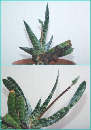 tntnH25-02-24観葉植物 (1)_1