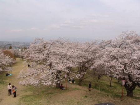 tntnH25-04-01大法師(おおほし)公園の桜 (5)