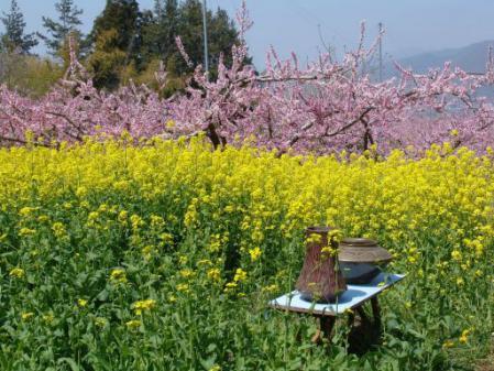 tntnH25-04-05花と焼き物野外作陶 (11)